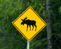_MG_4543 Moose Warning